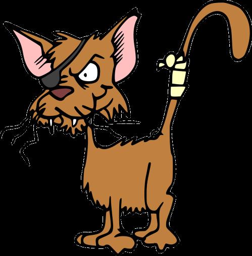 cat-47896_1280